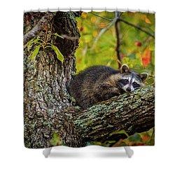 Bandit #2 Nap Time Shower Curtain