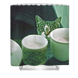 Bandit Shower Curtain by Laurie Stewart