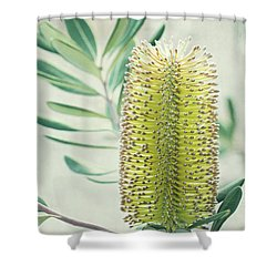 Shower Curtain featuring the photograph Banksia by Linda Lees