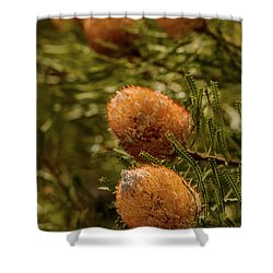 Shower Curtain featuring the photograph Banksia by Werner Padarin