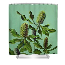 Banksias Australian Flora Painting Shower Curtain