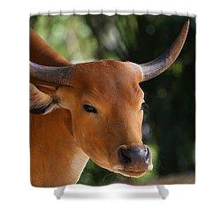 Banteng  Shower Curtain