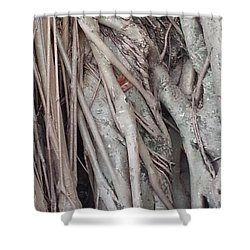 Banyan In Maui Shower Curtain