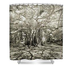 Banyan Strangler Fig Tree Shower Curtain