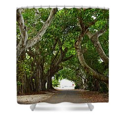 Banyan Street Shower Curtain