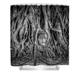 Banyan Tree Shower Curtain by Adrian Evans