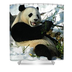 Bao Bao Sittin' In The Snow Taking A Bite Out Of Bamboo2 Shower Curtain