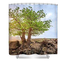 Shower Curtain featuring the photograph Baobab Tree by Alexey Stiop