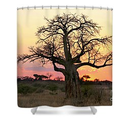 Baobab Tree At Sunset  Shower Curtain