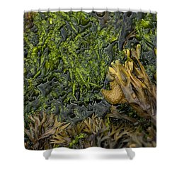 Bar Harbor Maine Coastal Life Shower Curtain
