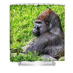 Baraka - Western Lowalnd Silverback Gorilla Shower Curtain