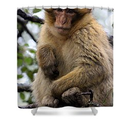 Shower Curtain featuring the photograph Barbary Ape by Ramona Johnston