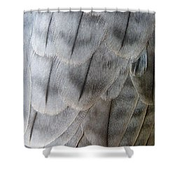 Barbary Falcon Feathers Shower Curtain