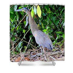 Bare-throated Tiger Heron Shower Curtain