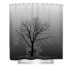 Bare Tree In Fog- Pe Filter Shower Curtain by Nancy Landry