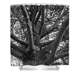 Bare Tree Shower Curtain