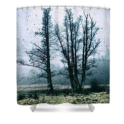 Bare Winter Trees Shower Curtain by Karen Stahlros