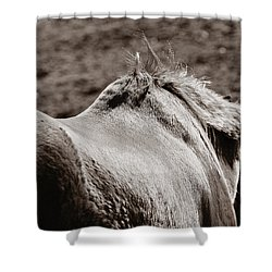 Bareback Shower Curtain by Angela Rath