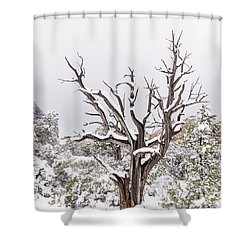 Bark And White Shower Curtain