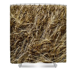 Shower Curtain featuring the photograph Barley by RKAB Works