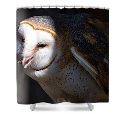 Barn Owl 1 Shower Curtain