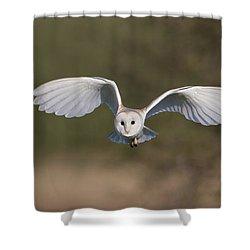 Barn Owl Approaching Shower Curtain