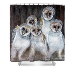 Barn Owl Chicks Shower Curtain