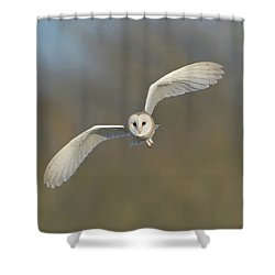 Barn Owl Hunting In Worcestershire Shower Curtain