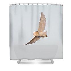 Barn Owl Hunting Shower Curtain