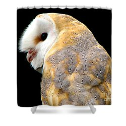 Barn Owl Shower Curtain by Rose Santuci-Sofranko