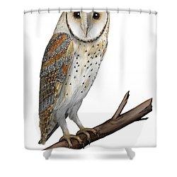 Barn Owl Screech Owl Tyto Alba - Effraie Des Clochers- Lechuza Comun- Tornuggla - Nationalpark Eifel Shower Curtain