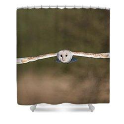 Barn Owl Wingspan Shower Curtain