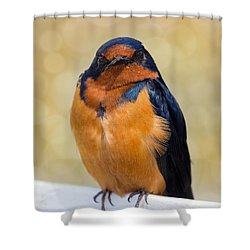 Barn Swallow Shower Curtain by David Gn