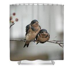 Barn Swallow Fledglings Shower Curtain