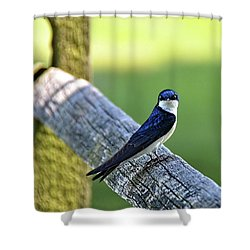 Barn Swallow Looking Angry Shower Curtain by Ronda Ryan