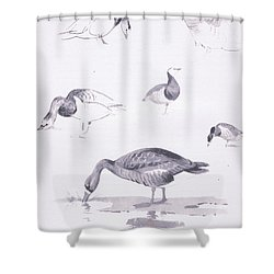 Barnacle And White Fronted Geese Shower Curtain by Archibald Thorburn