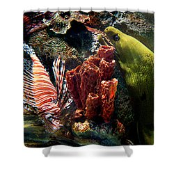 Barnacle Buddies Shower Curtain by Bill Pevlor