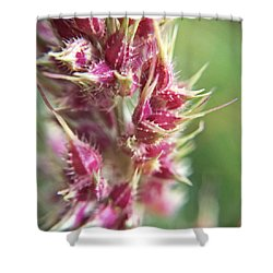 Barnyard Grass Seed Head Macro Shower Curtain by Robyn Stacey