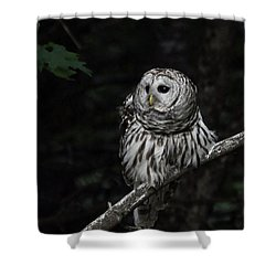 Shower Curtain featuring the photograph Barred Owl 2 by Glenn Gordon