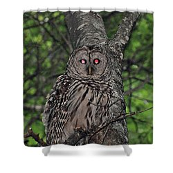 Shower Curtain featuring the photograph Barred Owl 3 by Glenn Gordon