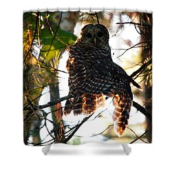 Barred Owl At Sunrise Shower Curtain