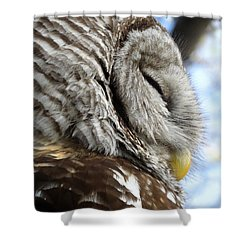Shower Curtain featuring the photograph Barred Owl Beauty by Rebecca Overton