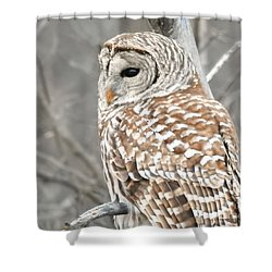 Barred Owl Close-up Shower Curtain
