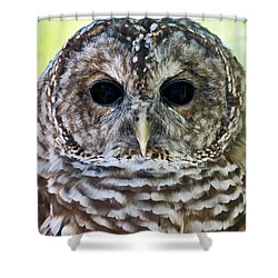 Barred Owl Closeup Shower Curtain