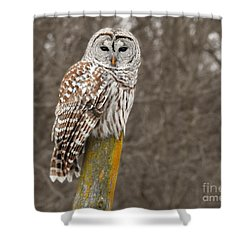 Barred Owl Shower Curtain by Kathy M Krause