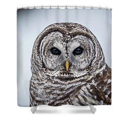 Shower Curtain featuring the photograph Barred Owl by Paul Freidlund