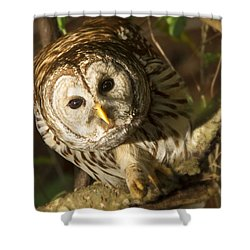 Barred Owl Peering Shower Curtain
