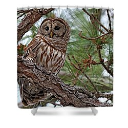 Barred Owl Perched In Tree Shower Curtain