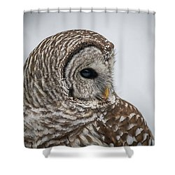 Shower Curtain featuring the photograph Barred Owl Portrait by Paul Freidlund