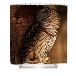 Shower Curtain featuring the digital art Barred Owl Sleeping In A Tree by Chris Flees